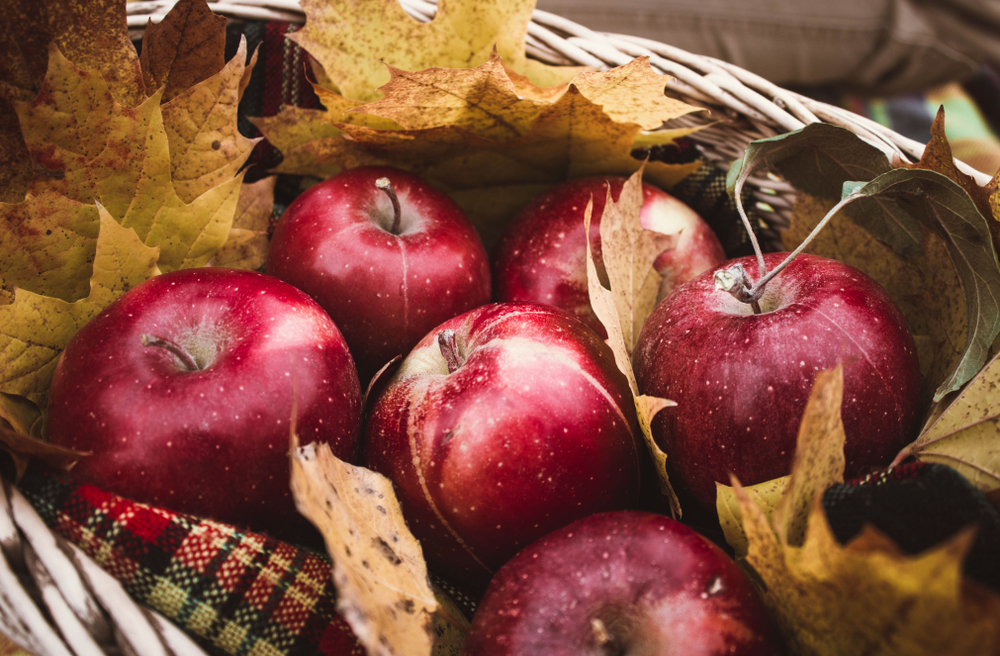 fall foods for weight loss
