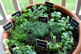 Growing Your Own Herb Garden