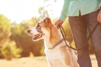 Fun Ways to Lose Weight with Your Pet