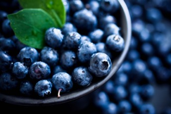 Blueberries — Keeping your Body in Business!